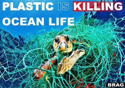 no_plastic_3